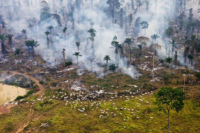 planet-pollution-overdevelopment-overpopulation-overshoot-8
